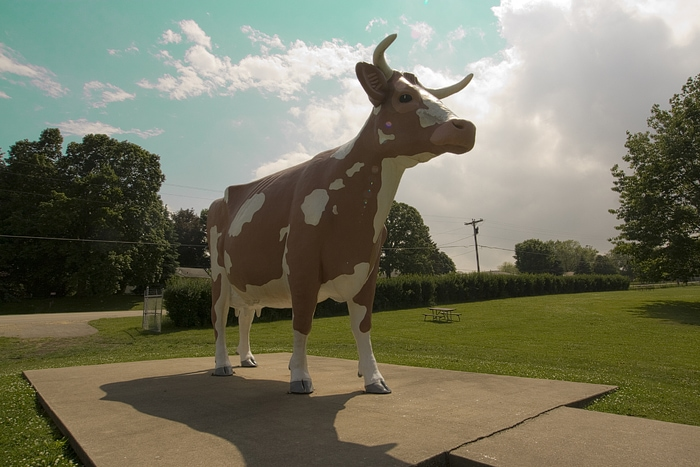 Gertrude the Cow in Rockford, Illinois