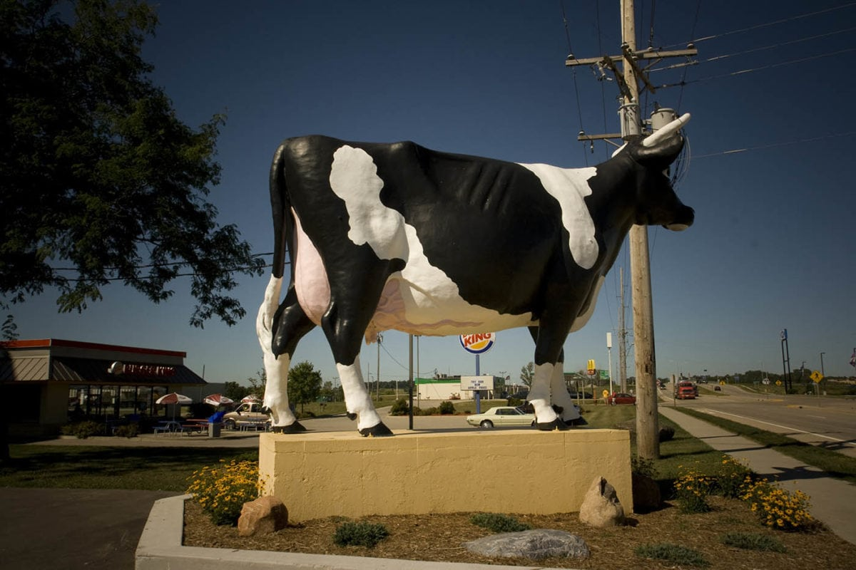 ? Sissy the Cow in DeForest, Wisconsin