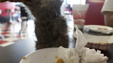 Flopsy the Jackalope ate his entire Guberburger at The Wheel Inn in Sedalia, Missouri.