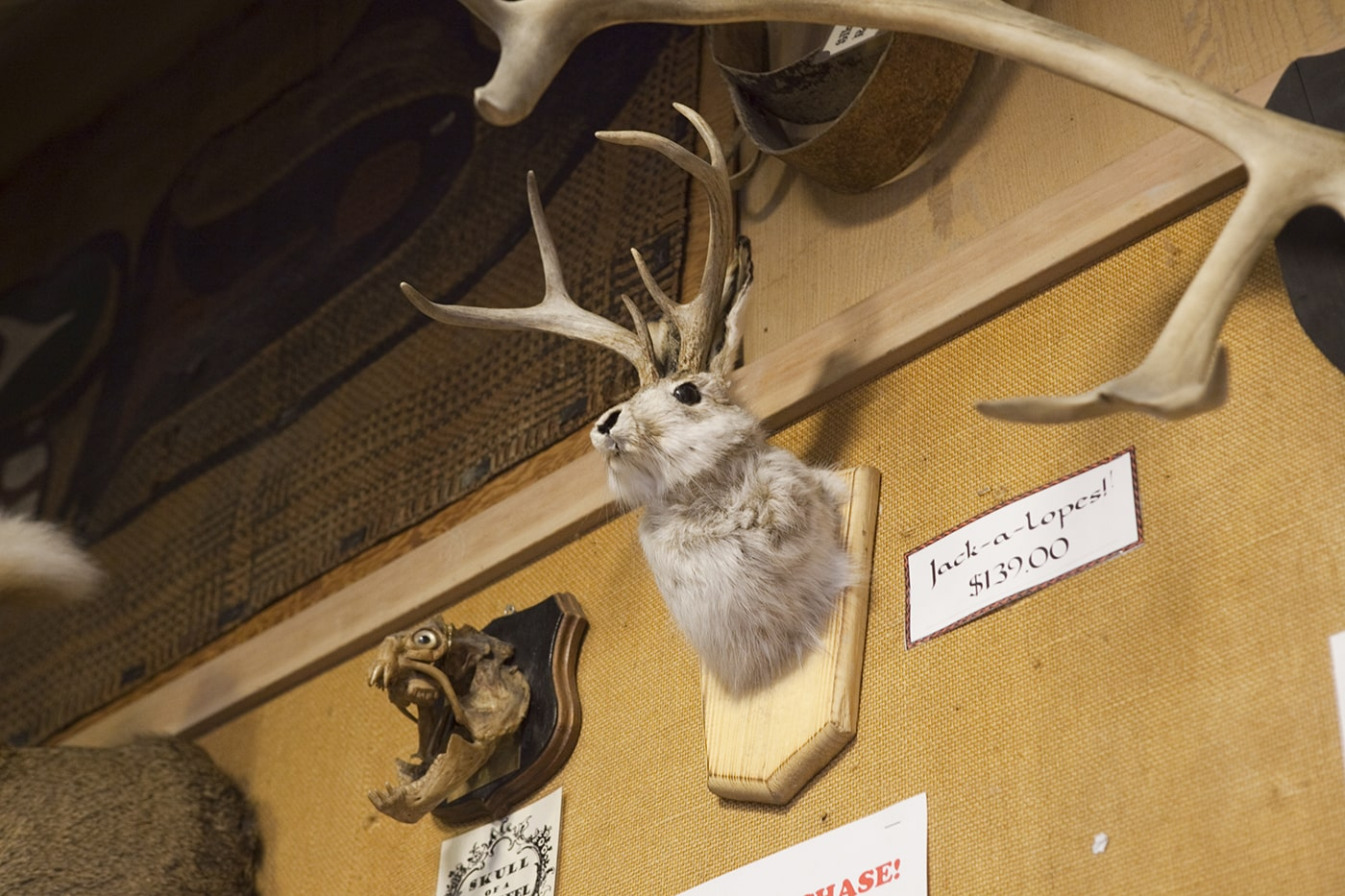 Jackalope at Ye Olde Curiosity Shoppe in Seattle, Washington