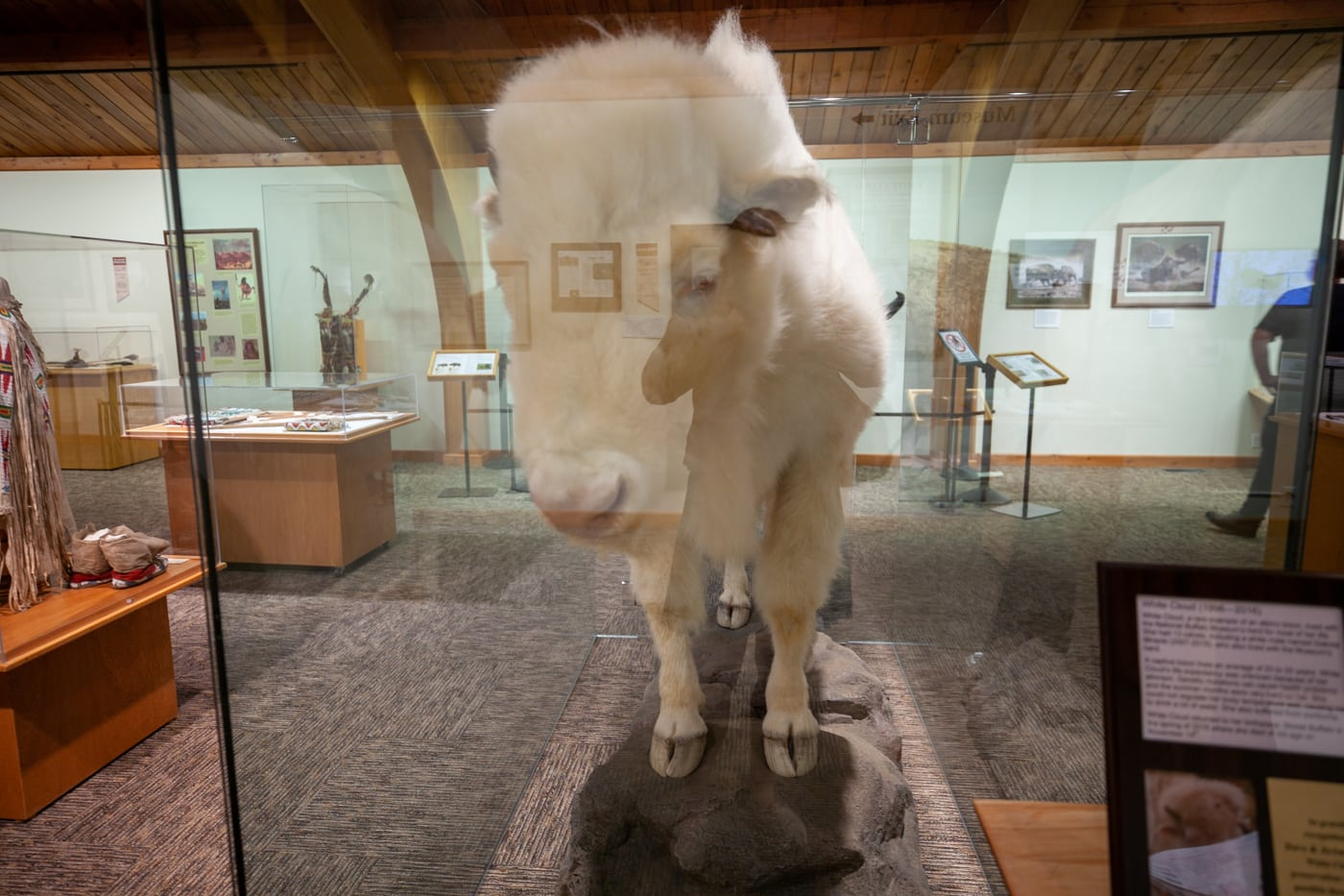 National Buffalo Museum in Jamestown, North Dakota