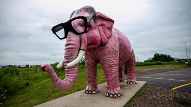 Pinkie the Pink Elephant in DeForest, Wisconsin. Giant Pink Elephant with Glasses roadside attraction in Wisconsin.