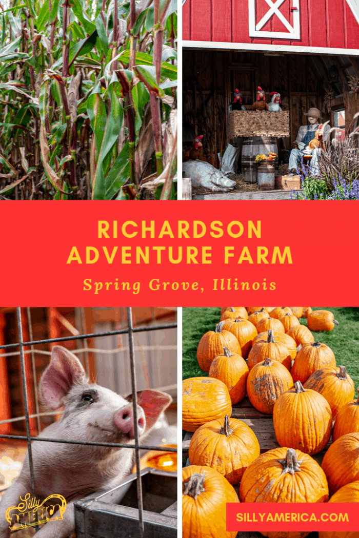 At Richardson Adventure Farm in Spring Grove, Illinois you can pick pumpkins, watch pig races, and get lost in the world's largest corn maze. Full of fun activities to celebrate the autumn harvest.  #PumpkinFarm #PumpkinFarmIdeas #PumpkinFarmPhotography #AutumnHarvest #PumpkinFarmActivities #Halloween #PumpkinFarmAesthetic #CornMaze #CornMazePhotoshoot #IllinoisPumpkinFarm