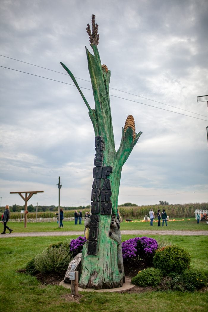 The World's Tallest Corn Stalk at Richardson Adventure Farm in Spring Grove, Illinois.