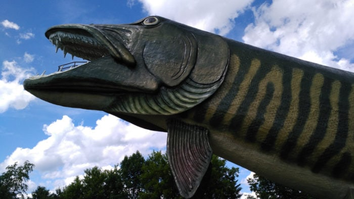 Best Roadside Attractions - World's Largest Fish at the National Freshwater Fishing Hall of Fame in Hayward, Wisconsin