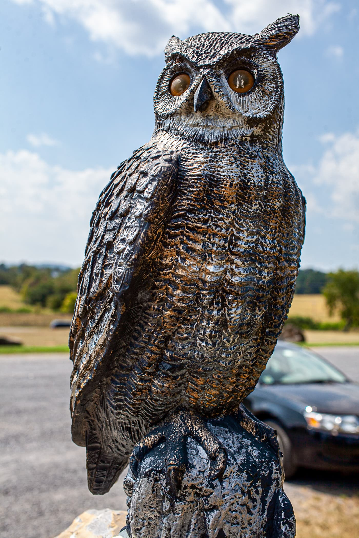 Owl outside Shenandoah Caverns in Quicksburg, Virginia.